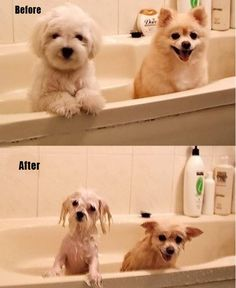 Before and After.  The one on the left looks just like our Molly when we get her wet.