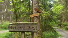 Wandern_20150516_Rothaarsteig-Spur_Trödelsteinpfad_Rundweg_Tobias_019
