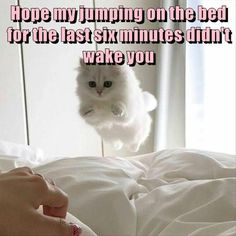 30 Funny Animal Pics for Your Monday