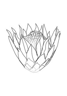 Minimal Protea Flower Art , One Line Art , Modern Art, Black and White Art, White Background! Botanical Line Drawing, Botanical Drawings, Linear Art, Abstract Flower Art, Protea Flower, Line Art Tattoos, Art Diary, Flower Template, Canvas Crafts
