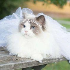 Έχοντας πάρει το όνομα της από την αυθεντική Ωραία Κοιμωμένη της Disney, η Aurora δεν είναι μια συνηθισμένη γάτα.   Πρόκειται για μια φ...