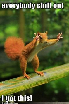 Funny Animal Captions - Just Calm Down
