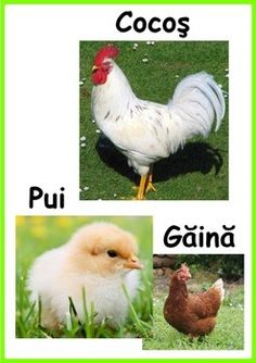 These cards can be used for language learning. www.heartofhope.org Girl Language, Romanian Language, Vocabulary Cards, Life Photo, Colorful Pictures, Gaia, Animals Beautiful, Birds, Languages