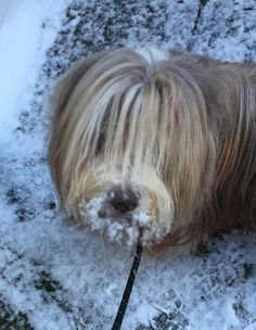 Barney loves the snow!