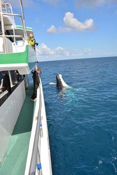 Thanks Out and About With Kids for this share.  Humpback Whale Watching in the calm waters on the lee side of Fraser Island #whalesherveybay #fraserisland #queensland #australia #humpbackwhales #whalewatching http://www.whalewatch.com.au/ www.queensland.com/whales