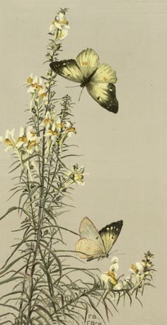 Yellow butterflies flying around tall flowers.