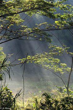 Glorious Sunbeams in the Woods