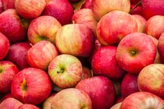 It's apple season, our favorite time of year! Let's talk about how to store fresh-picked apples. Storage will save the apples for later. Learn some methods. How To Store Cucumbers, How To Store Apples, Dehydrated Apples, Freezing Apples, Hard Apple Cider, Eating Bananas, Apple Varieties, Apple Season, Apple Chips