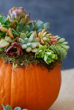 Keep your fall decor organic with an adorable succulent-topped pumpkin.