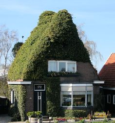 Ivy cottage, The Netherlands We all live in unigue homes