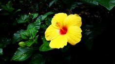 This is a flower which has yellow and red color. And leaves have a spectrum from yellow green to dark green. The cool color looks recede. Soohyeon, Kim