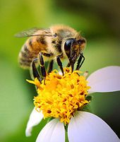 Bee products- health benefits