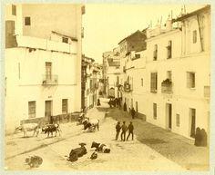 Espagne, Séville, Toros dans la rue Vintage albumen print. Tirage albuminé
