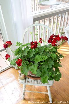 I Love Geraniums on the porch.