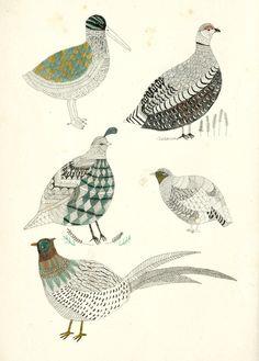 Game birds by Katt Frank. Art And Illustration, Illustrations Posters, Game Birds, Bird Drawings, Art Sketchbook, Bird Art, Graphic, Painting & Drawing, Beautiful Birds