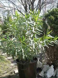 Leanderek - G-Portál Plants, Plant, Planets