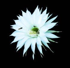 Photo by Elisabeta Vlad Daisy, Travel Photography, Urban, Awesome, Nature, Flowers, Plants, Naturaleza, Daisies