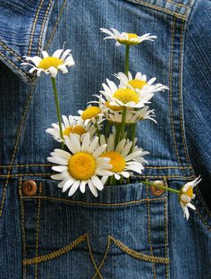 Pocket full of flowers - Idea Wallpapers , iPhone Wallpapers,Color Schemes Art Hoe Aesthetic, Flower Aesthetic, Aesthetic Vintage, Happy Flowers, Wild Flowers, Pretty Flowers, Sunflowers And Daisies, Daisy Love, Daisy Daisy