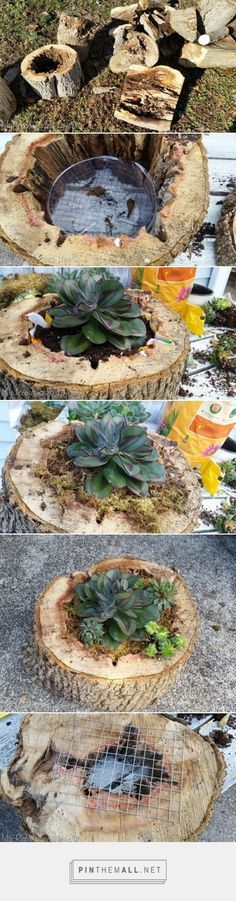 Succulent Planters   rotted tree trunk pieces - My Repurposed Life™ -