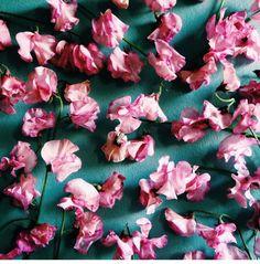 Beautiful colours: photo by Madeleine Johnson