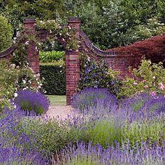 View through lavender to rose garden at Winterbourne Botanical Garden, University of Birmingham