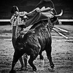 Oficial Fans Roca Rey España (@andres_rrv_fans) в Instagram: «IMPORTANTE!! Andrés Roca Reyno podrá torear esa tarde enAranda de Duerodebido a una artritis…»