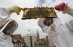 """""""Beehive designer Johannes Paul (right) and Natural England's ecologist Peter Massini, with a brood frame colonized with bees."""" Many bee ecologists urge people who want to aid bees to focus on planting bee-friendly flowers (e.g., marjoram, lavender) rather than try to have urban hives."""
