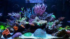 Reef Tanks, Vibrant Colors, Colours, Corals, Vivid Colors