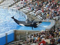 Seaworld Orlando amazing