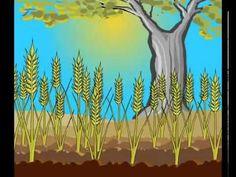 La parábola del sembrador - Dibujos animados musicales - YouTube