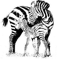 Un petit #zebre au quotidien, par #TribulationsDunPetitZebre