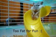 #Hamsters Slides
