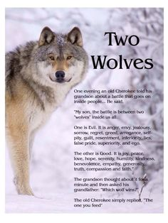 cherokee proverb two wolves - Google Search
