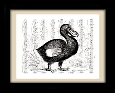 Dodo Bird, Black and White, Victorian Art, Bird Art, Sheet Music Art, Unique Gift, Book Art, Dorm Room, Wall Decor, Home Decor, Giclee Print