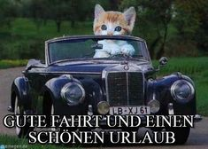 Gute fahrt - Cat drives car meme (www. Tiny Cats, Old Cats, Cats And Kittens, Crazy Cat Lady, Crazy Cats, Car Cat, Funny Animals, Cute Animals, Funniest Animals