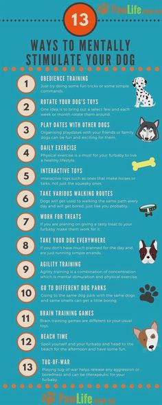 Training your dog is focused on building your relationship with your dog as well as setting up boundaries. Be firm but consistent and you will notice outstanding results in your dog training adventures. Training Your Puppy, Dog Training Tips, Potty Training, Training Pads, Training Classes, Training Academy, Service Dog Training, Training Online, Leash Training