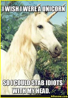 I wish I were a unicorn - funny pictures - funny photos - funny images - funny pics - funny quotes - funny animals @ humor Funny Meme Pictures, Funny Quotes, Funny Memes, Memes Humor, Funniest Quotes, Idiot Quotes, Cat Memes, Funny Unicorn Quotes, Intj Humor
