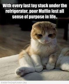 funny caption sad cat with every last toy stuck under refrigerator poor muffin lost all sense of purpose in life
