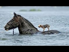 Emotional and Amazing Animals Rescuing Other Animals HD, Animals have an incredible range of emotions for their own and others that many humans cannot understand - or respect.
