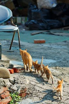 Cat Having Kittens I Love Cats And Kittens Over 50 Breeds The Animals, Baby Animals, Funny Animals, Funniest Animals, Funny Horses, Pretty Cats, Beautiful Cats, Crazy Cat Lady, Crazy Cats