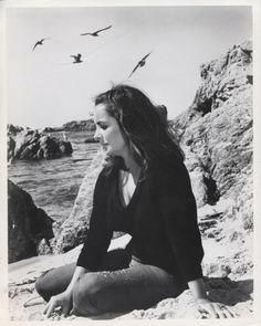 Elizabeth Taylor one 8x10 bxw photo photograph #51