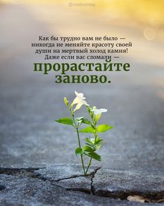 Positive Phrases, Positive Thoughts, Positive Quotes, Poem Quotes, Wise Quotes, Russian Quotes, Touching Words, Christian Cards, Good Morning Photos