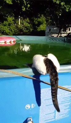 Kitty walks on water after meanie pushes him in.