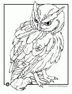 realistic owl coloring page 231x300 Owl Coloring Pages