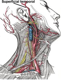 Superficial_temporal_artery