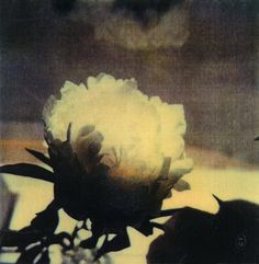Cy Twombly (1980)