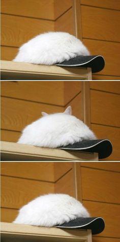 ん?帽子が hat cat