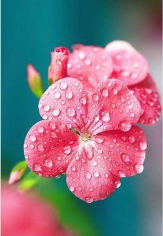 Spring Flowers http://www.wailana.com