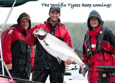 The terrific Tyees keep coming! Peregrine Lodge's guides continue finding the trophy salmon.