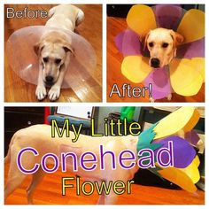 22 Hilarious 'Cone Of Shame' Makeovers That Your Pet Will Hate Even More.